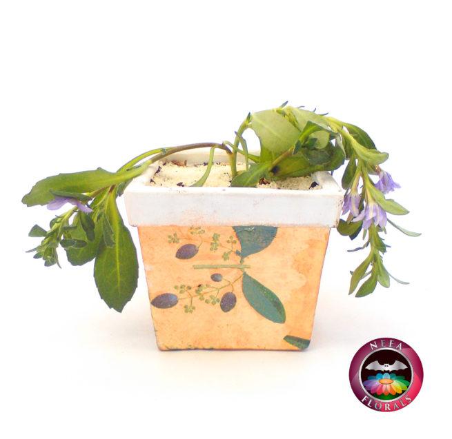 Scaevola en Matera Cuadrada Vintage. Catálogo Neea Florals