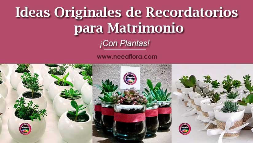 Ideas originales de recordatorios para matrimonio...con plantas! Recordatorios Bogotá Neea Flora