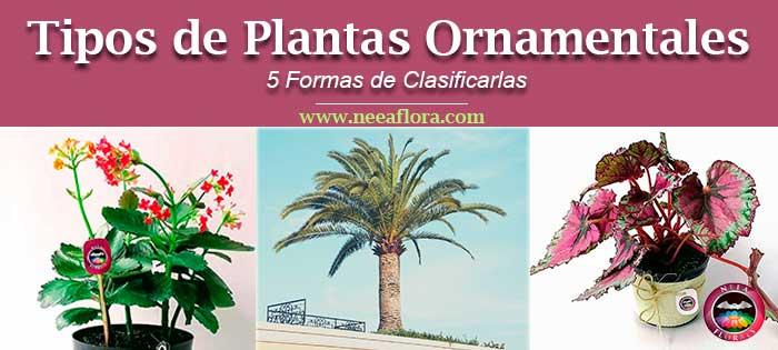 Tipos de plantas ornamentales 5 formas de clasificarlas for Plantas decorativas ornamentales