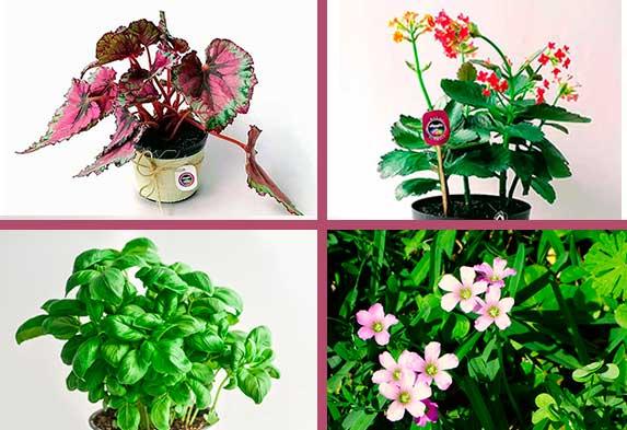 Tipos de plantas ornamentales 5 formas de clasificarlas - Tipos de plantas de exterior ...